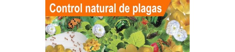 Control Natural de Plagas de Jardín