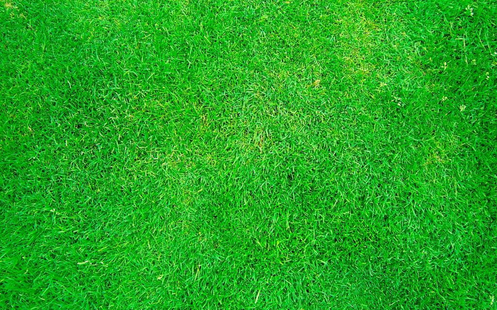 Ahora su pasto será tan verde como el del vecino