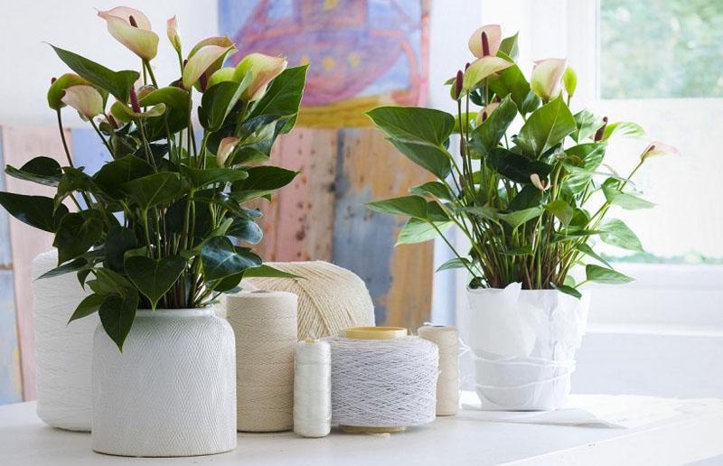 plantas-febrero