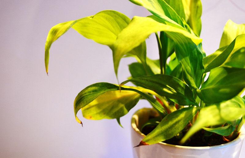 plantas-marzo