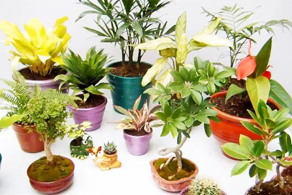 plantas_agosto